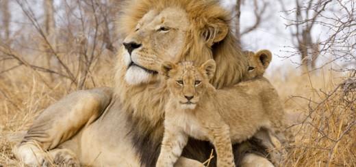loevefamilie