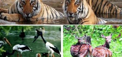 Goa-Wildlife