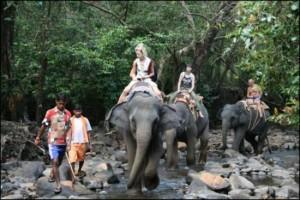 shanti-elephant-sanctuary